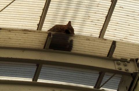 三条会商店街 アーケード上のネコ