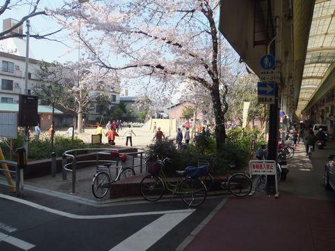 三条会商店街 三条公園の桜
