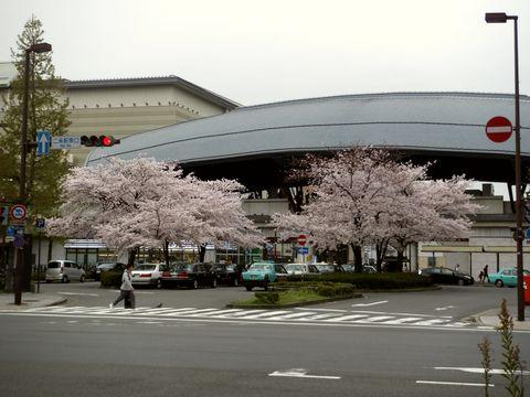 二条駅前の桜